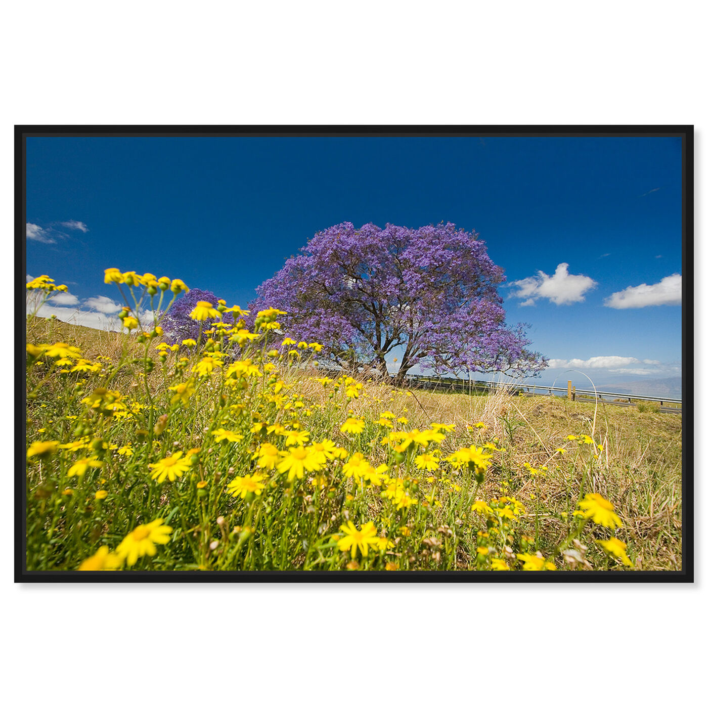 Front view of Jacaranda Tree by David Fleetham featuring nature and landscape and country landscapes art.