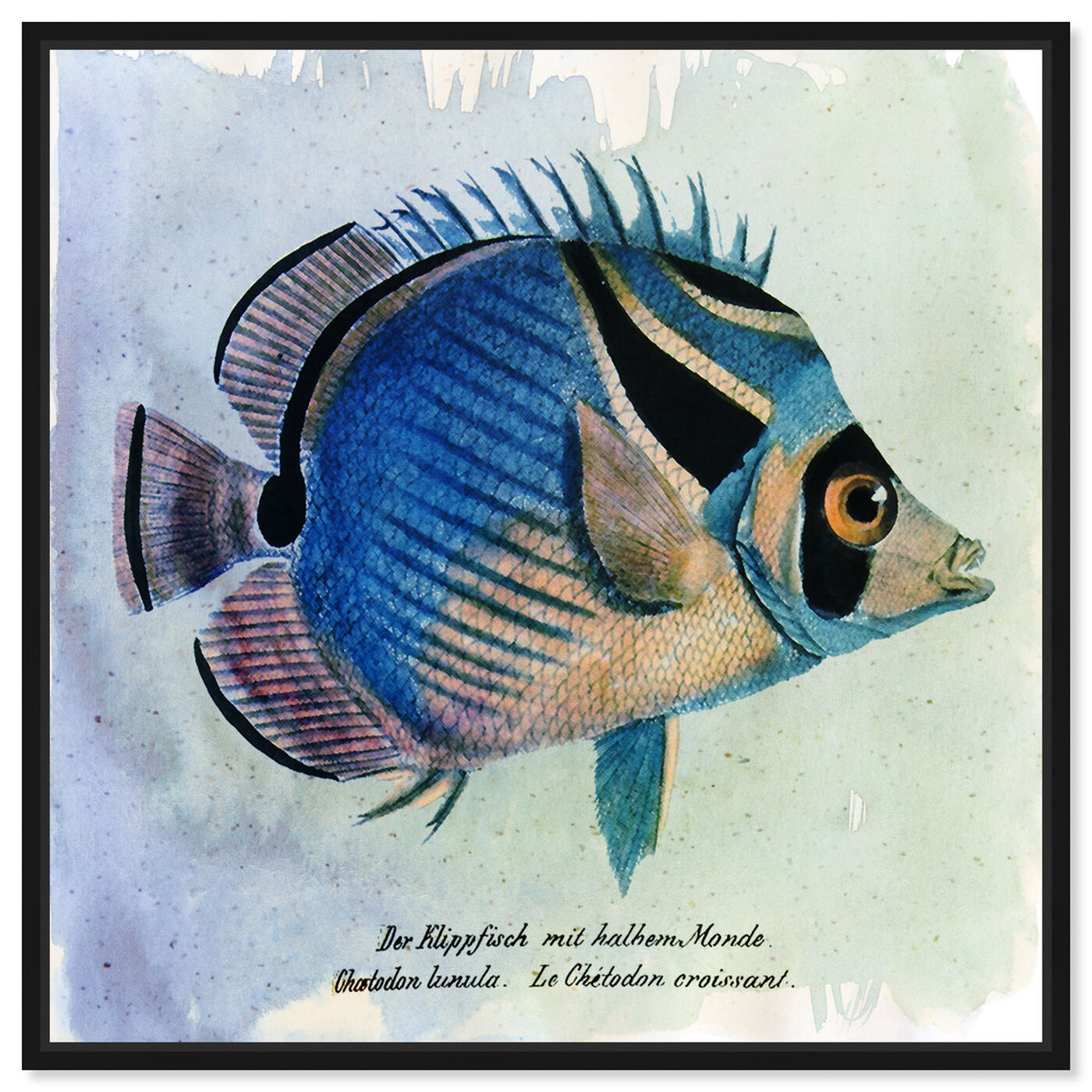 Front view of Croissant Fish featuring animals and sea animals art.
