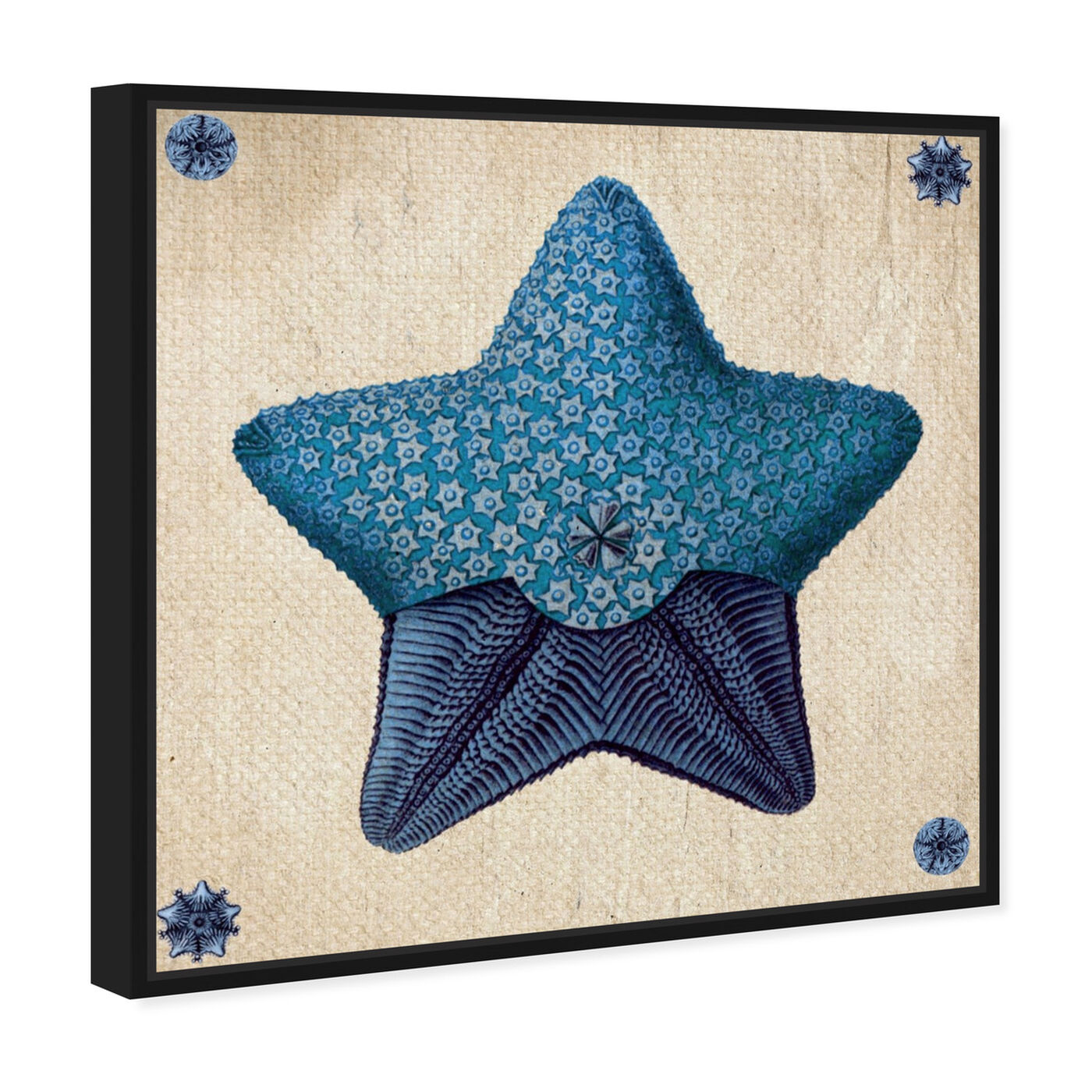 Angled view of Asteridia III featuring nautical and coastal and marine life art.