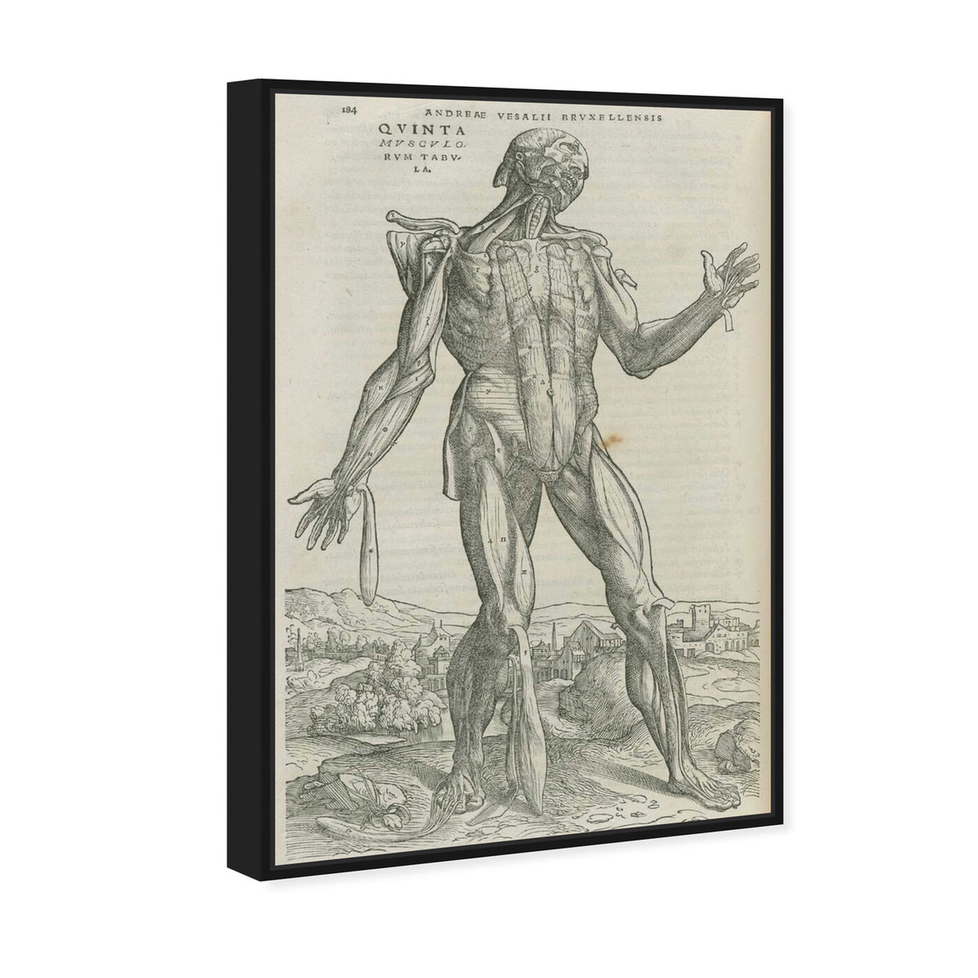 Angled view of Vesalius II - The Art Cabinet featuring classic and figurative and nudes art.
