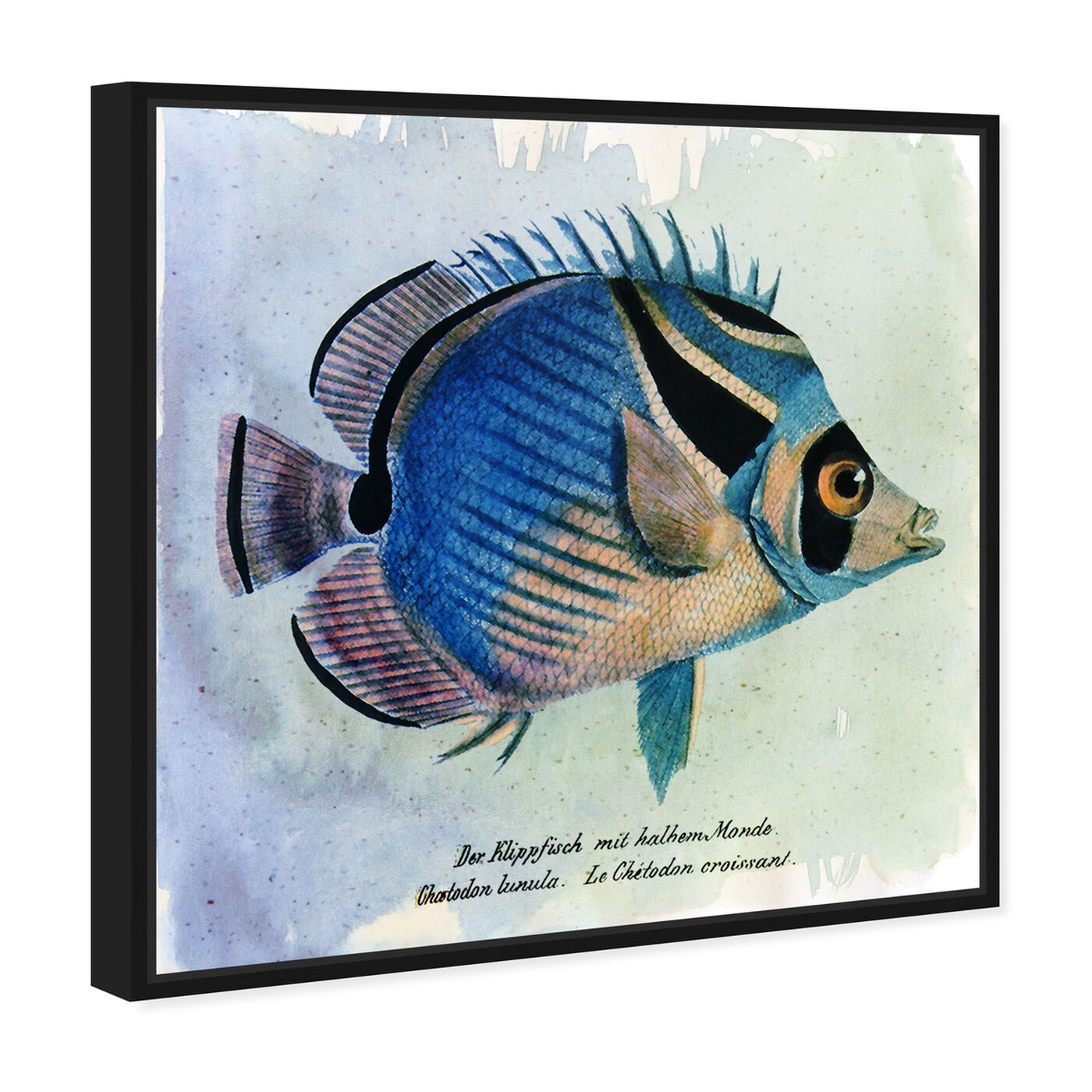 Angled view of Croissant Fish featuring animals and sea animals art.