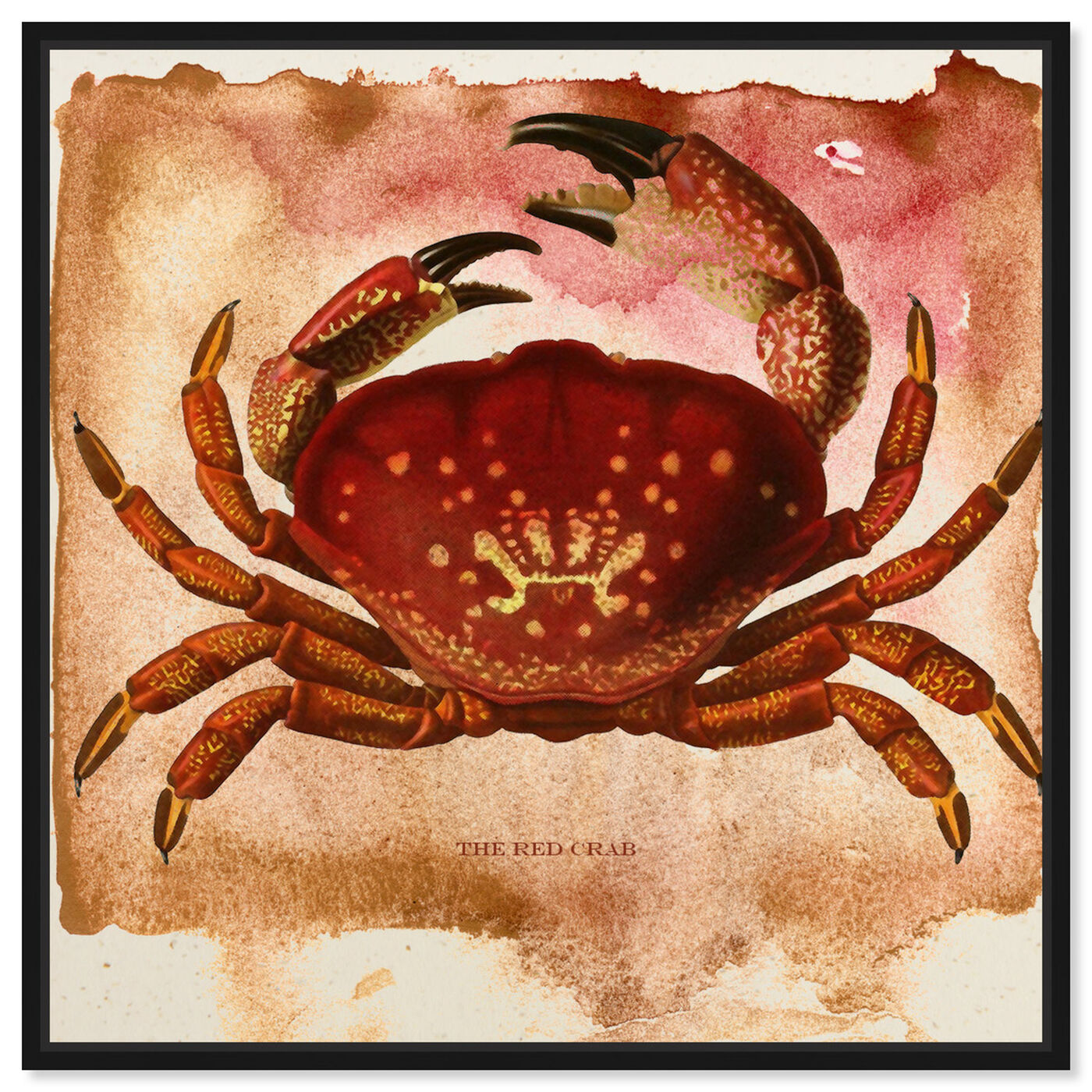 Front view of The Red Crab II featuring animals and sea animals art.