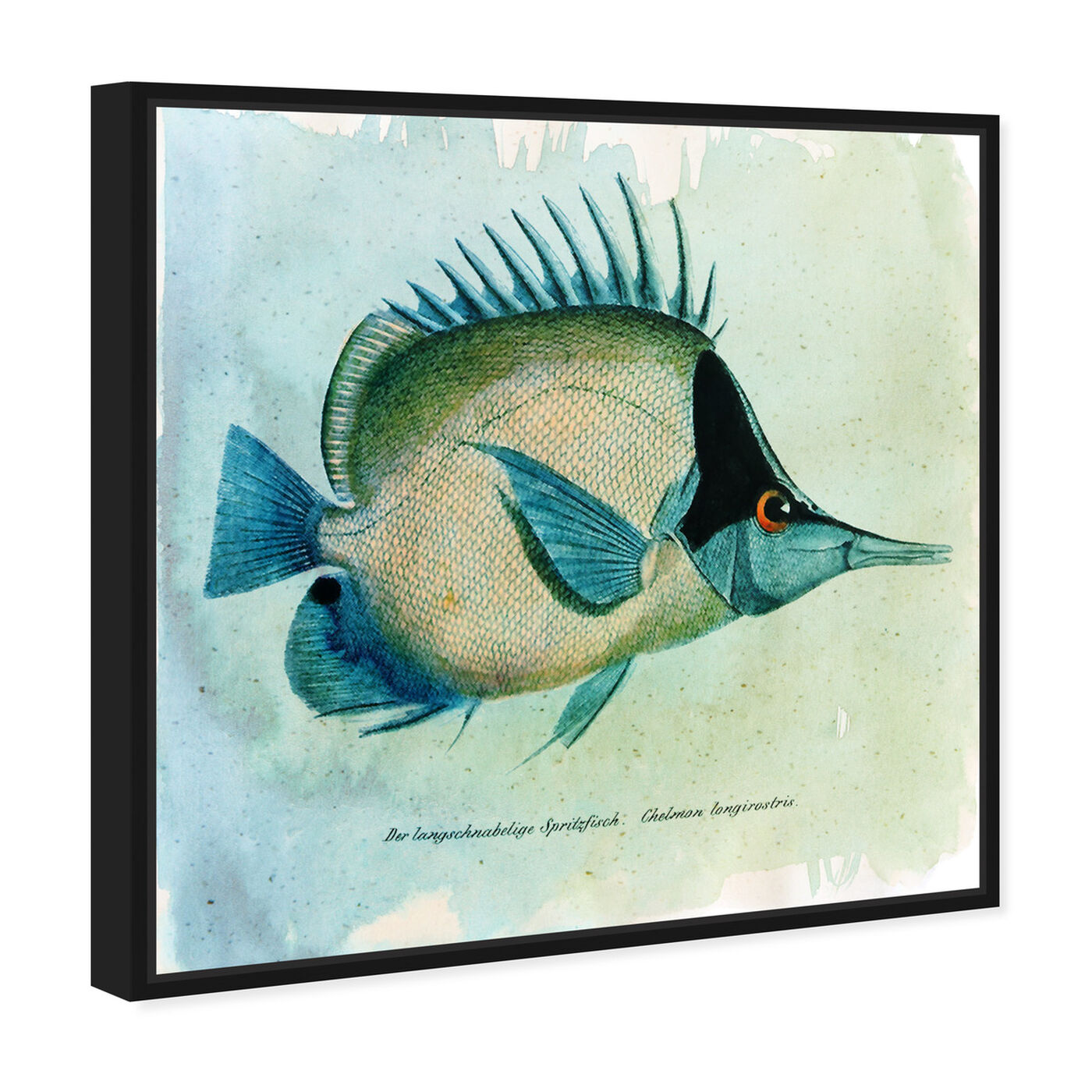 Angled view of Butterfly Fish featuring animals and sea animals art.