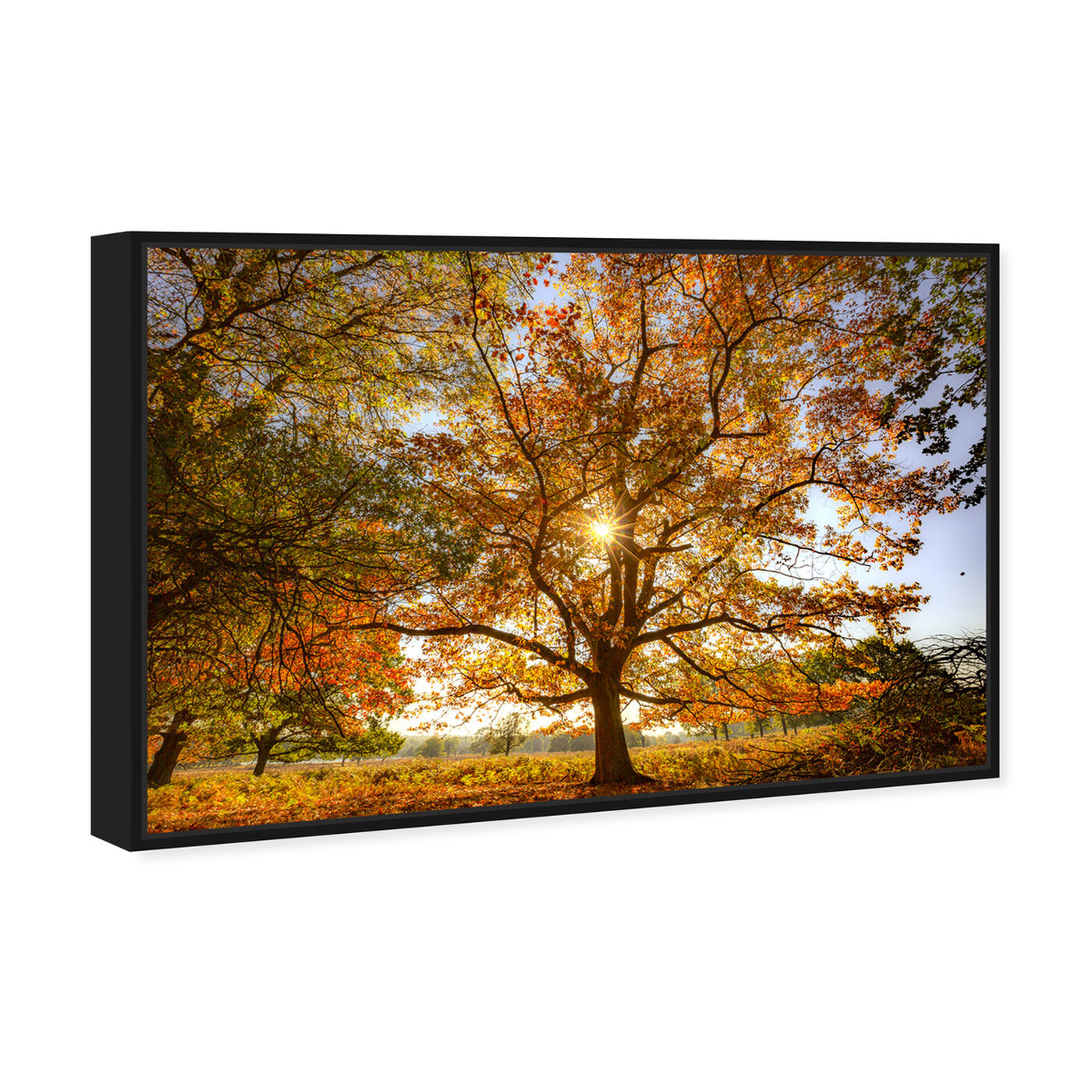 Angled view of Curro Cardenal - Autumn Wisdom tree featuring nature and landscape and forest landscapes art.