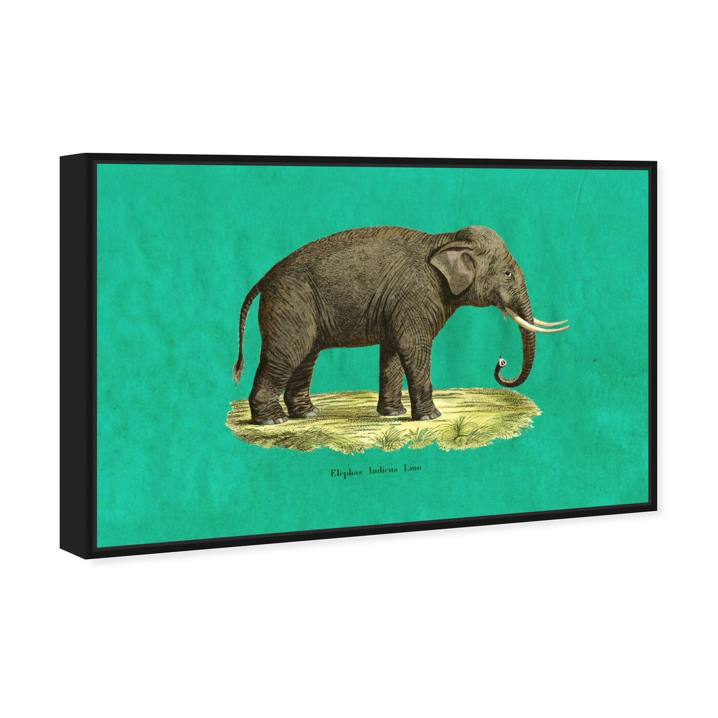 Angled view of Elephant I featuring animals and zoo and wild animals art.