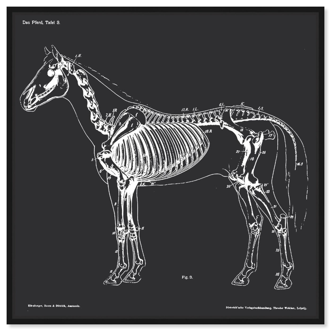 Front view of Squelette Du Cheval featuring animals and skeletons art.