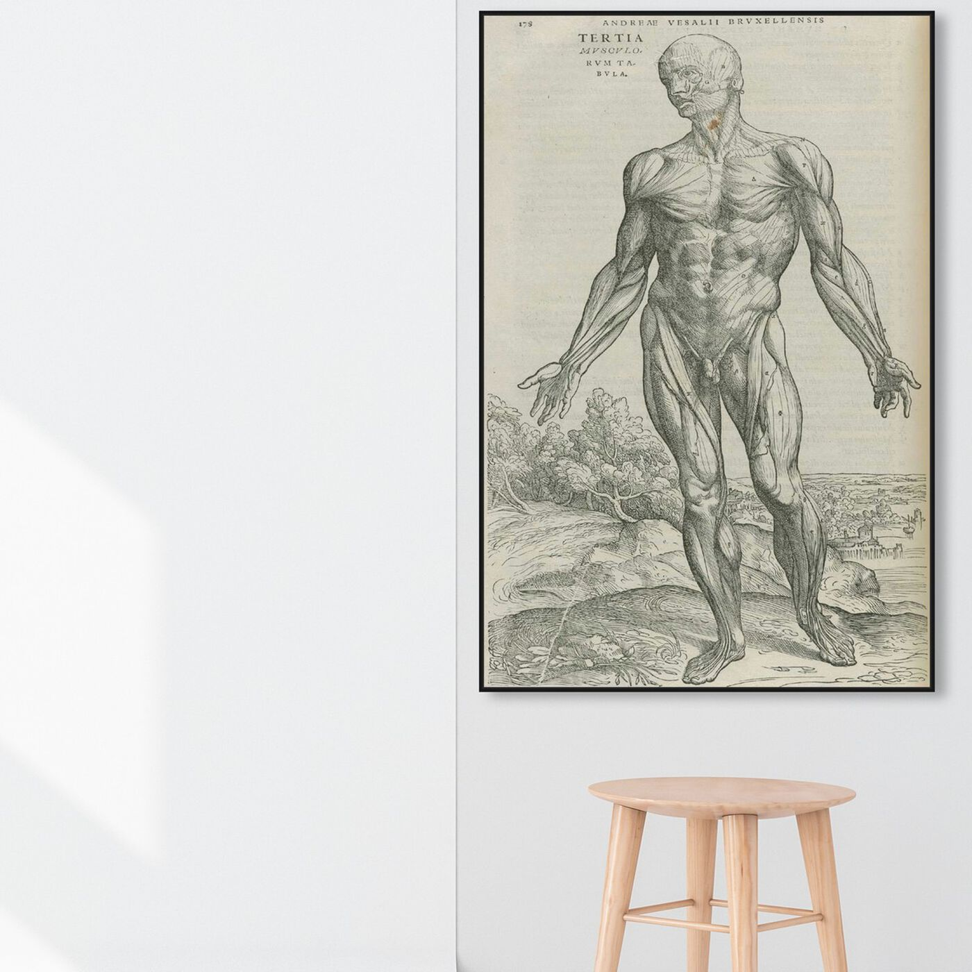 Hanging view of Vesalius IV - The Art Cabinet featuring classic and figurative and nudes art.