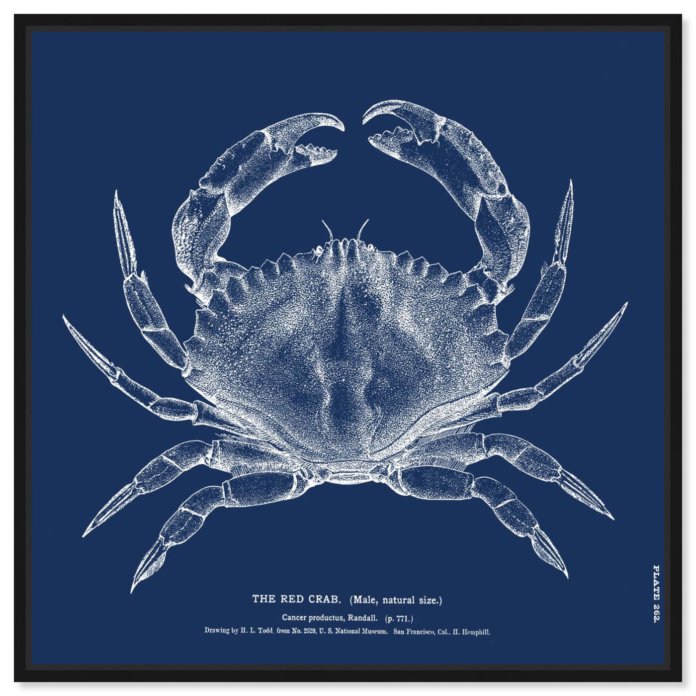 Front view of The Red Crab - Blue featuring nautical and coastal and marine life art.