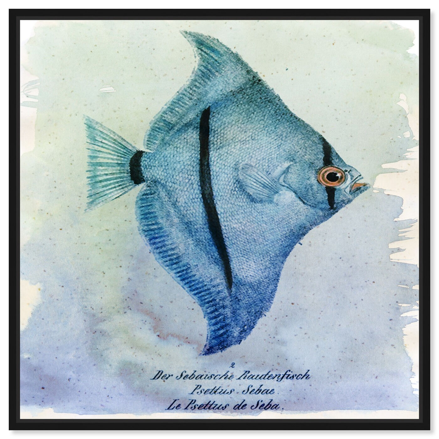 Front view of Seba Fish featuring nautical and coastal and marine life art.