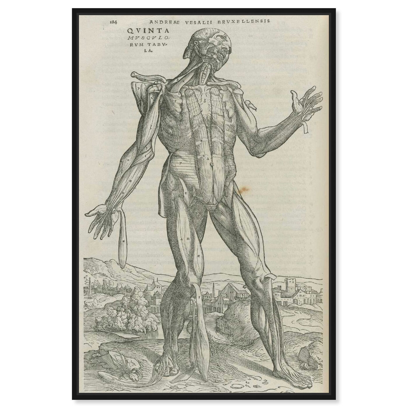 Front view of Vesalius II - The Art Cabinet featuring classic and figurative and nudes art.