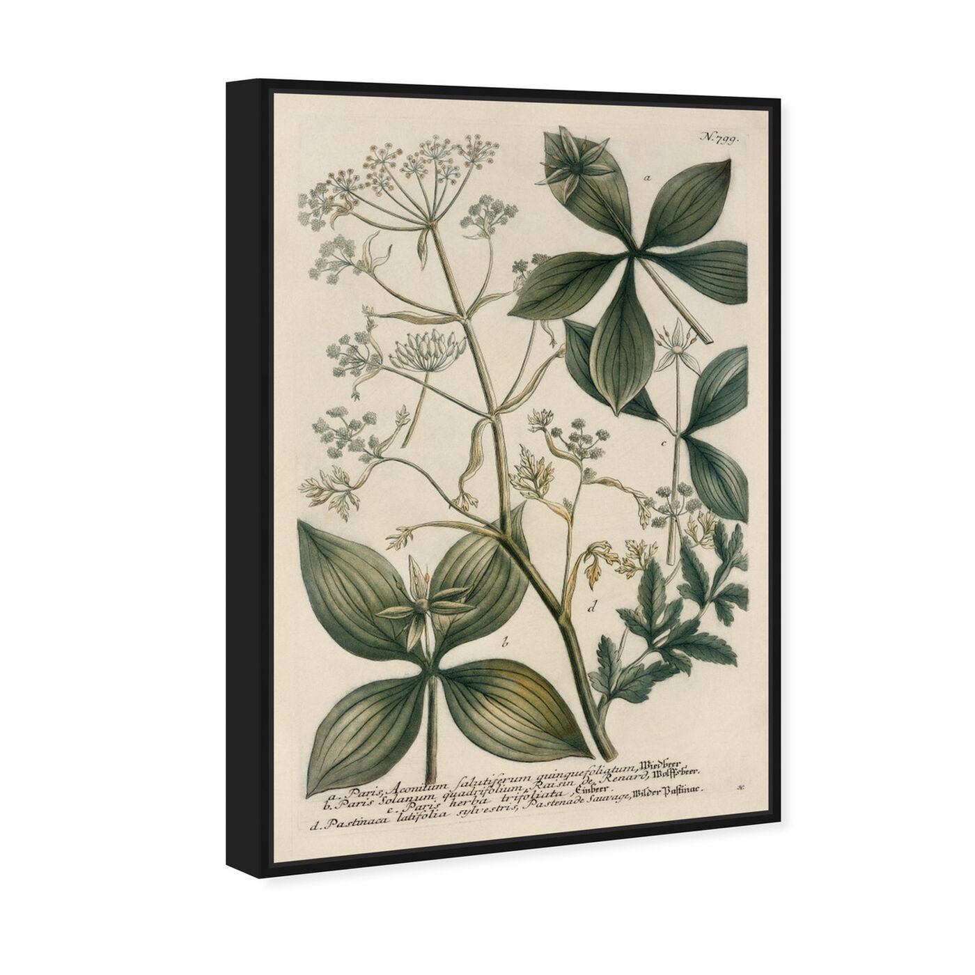 Angled view of Herbs featuring floral and botanical and botanicals art.