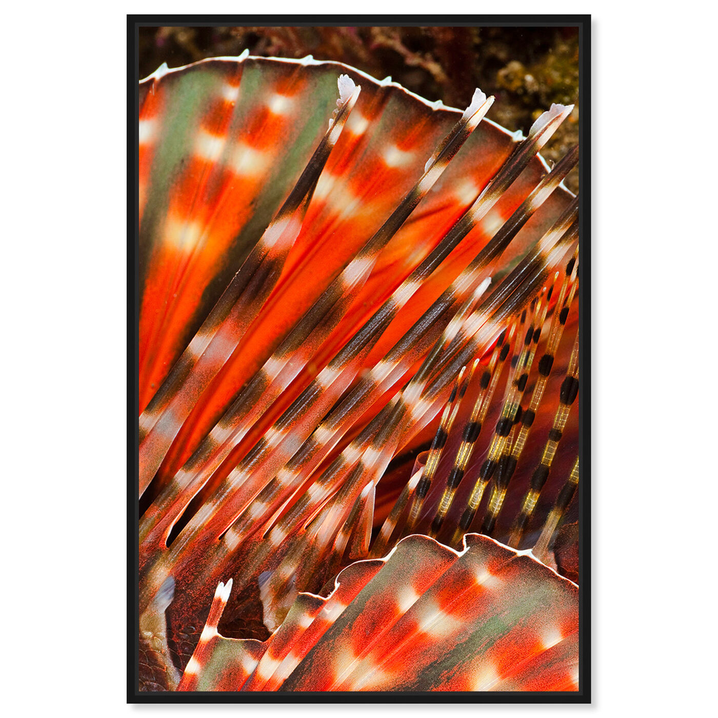 Front view of Zebra Lionfish by David Fleetham featuring nautical and coastal and marine life art.