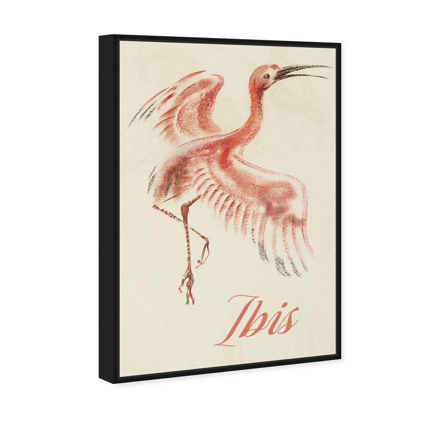 Angled view of Ibis featuring animals and birds art.