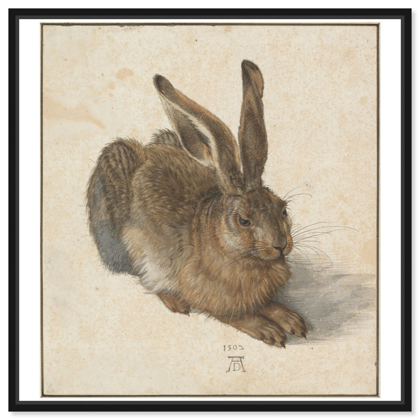 Front view of Durer - Hare featuring animals and farm animals art.