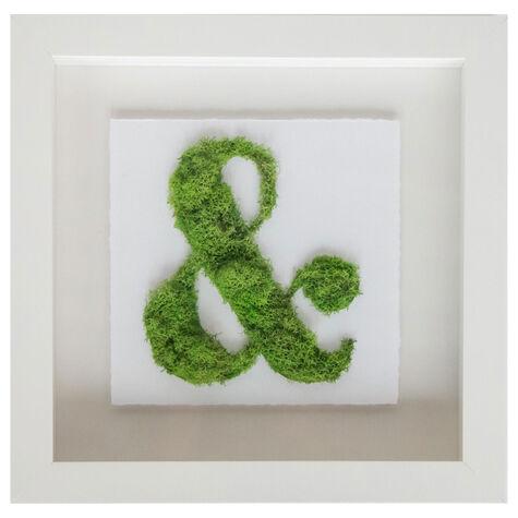 Ampersand Moss