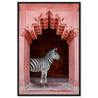 Front view of Zebras Apartment is Coral Pink featuring animals and zoo and wild animals art. image number null