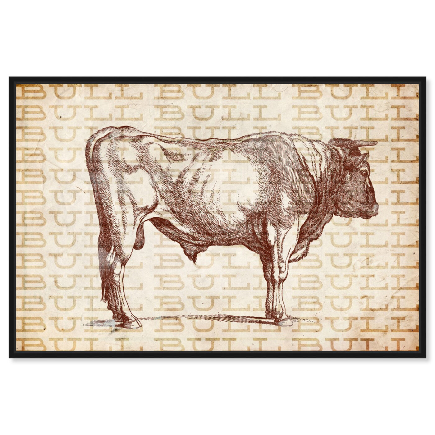 Front view of Bull featuring animals and farm animals art.
