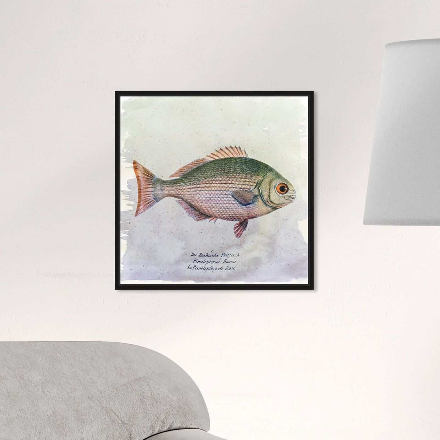 Hanging view of Bosc Fish featuring animals and sea animals art.