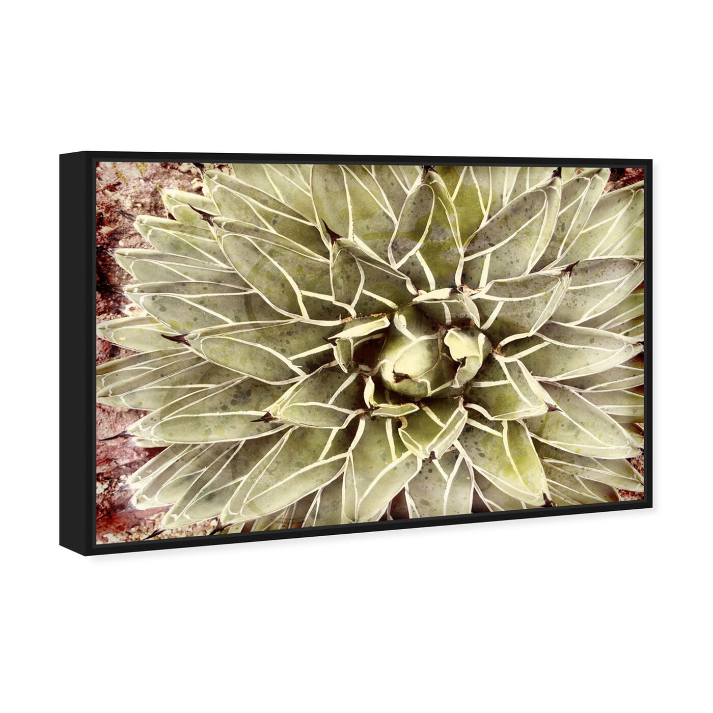 Angled view of Cactus Flower featuring floral and botanical and botanicals art.