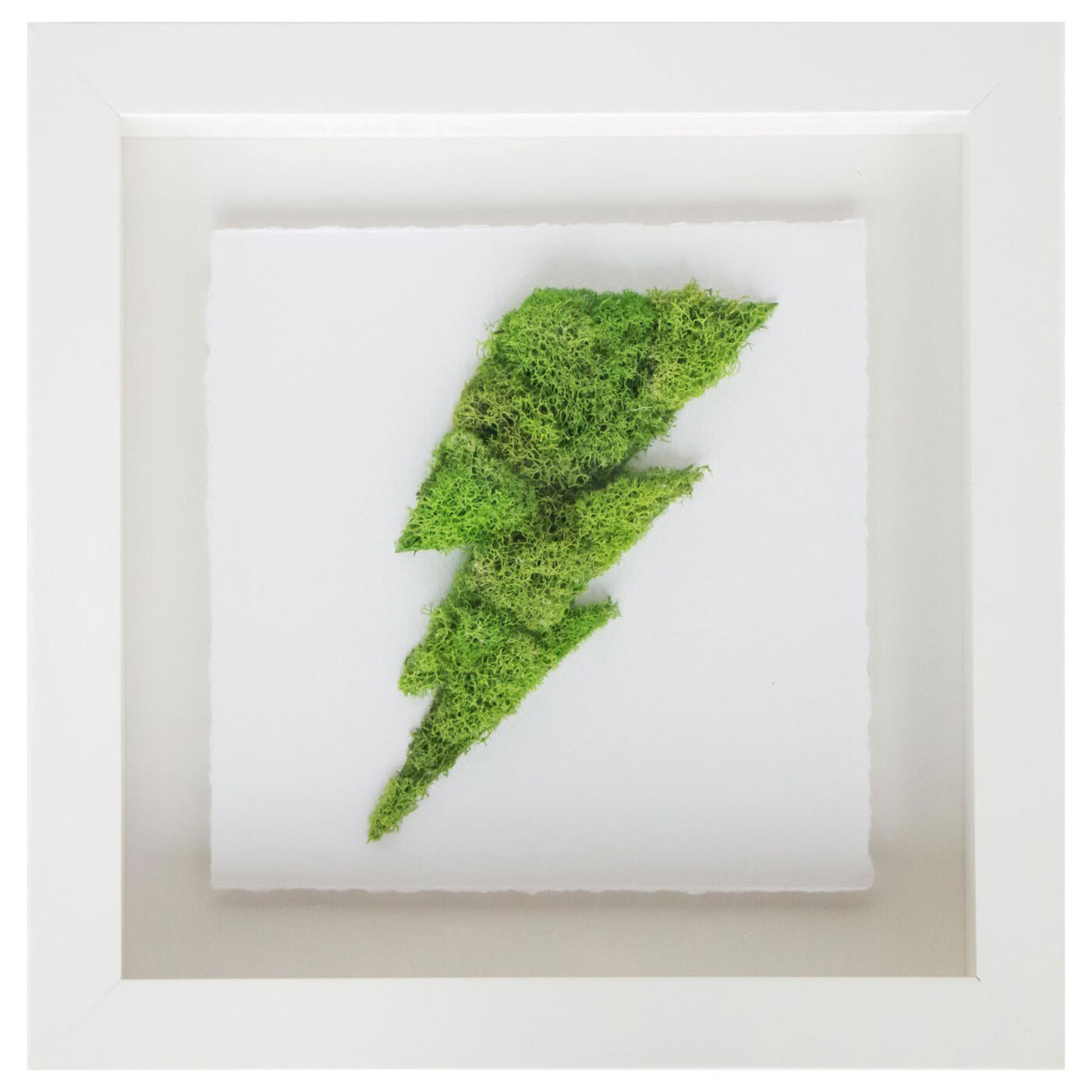 Moss  Lightning