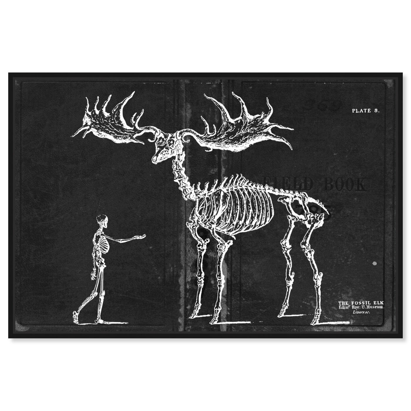 Front view of Fossil Elk 1830 featuring animals and skeletons art.