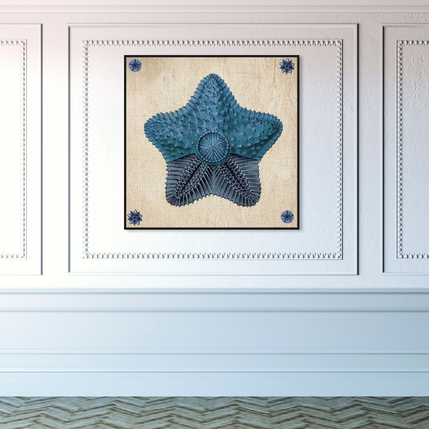 Hanging view of Asteridia II featuring nautical and coastal and marine life art.