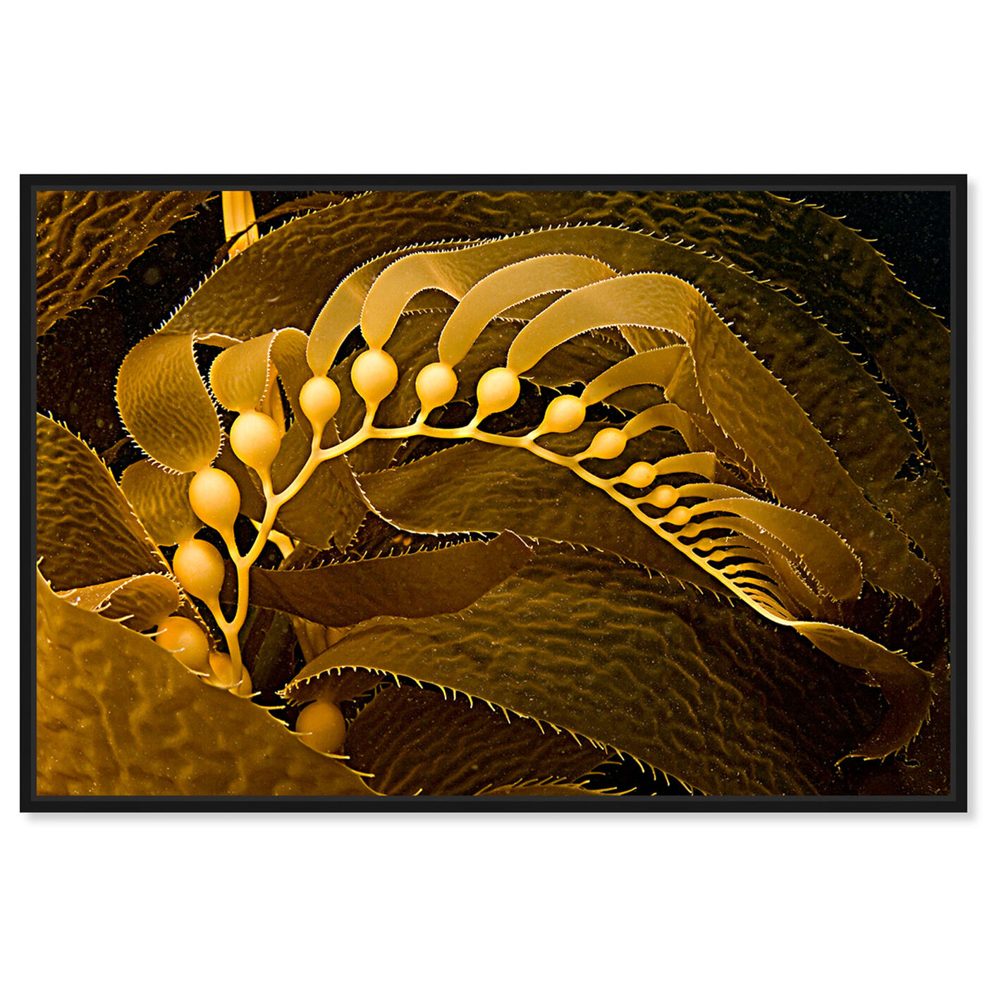 Front view of Giant Kelp by David Fleetham featuring nautical and coastal and marine life art.