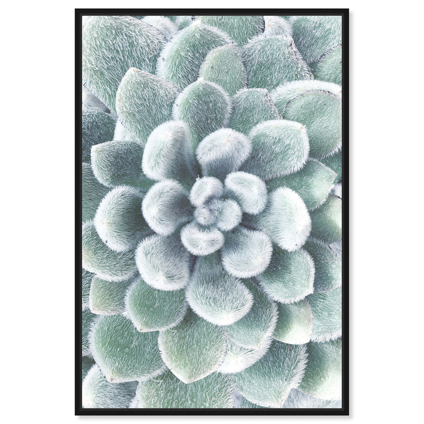 Front view of Succulent Zoom IV featuring floral and botanical and botanicals art.