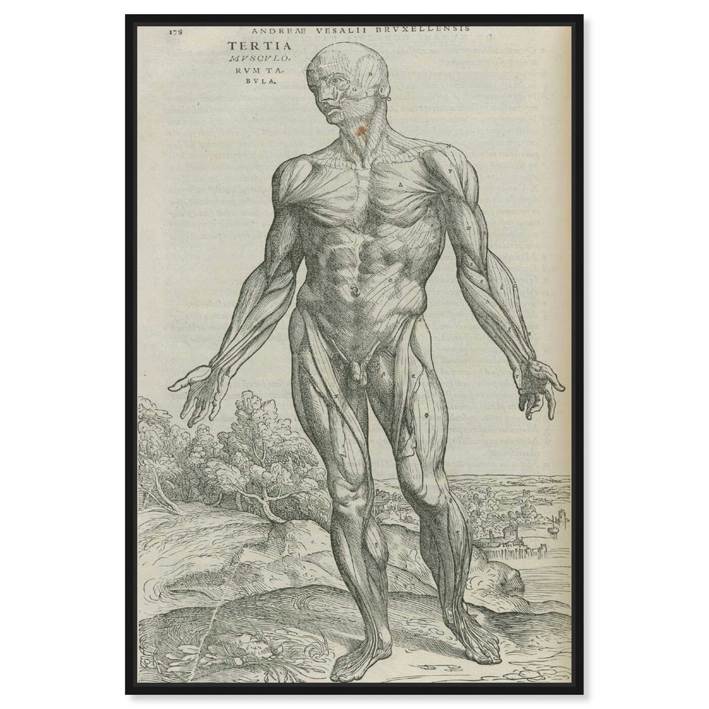 Front view of Vesalius IV - The Art Cabinet featuring classic and figurative and nudes art.