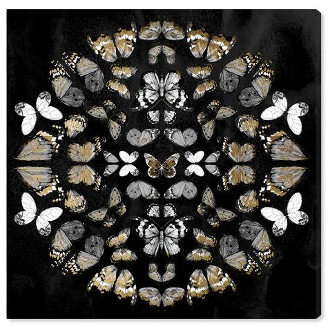 Butterfly K Night