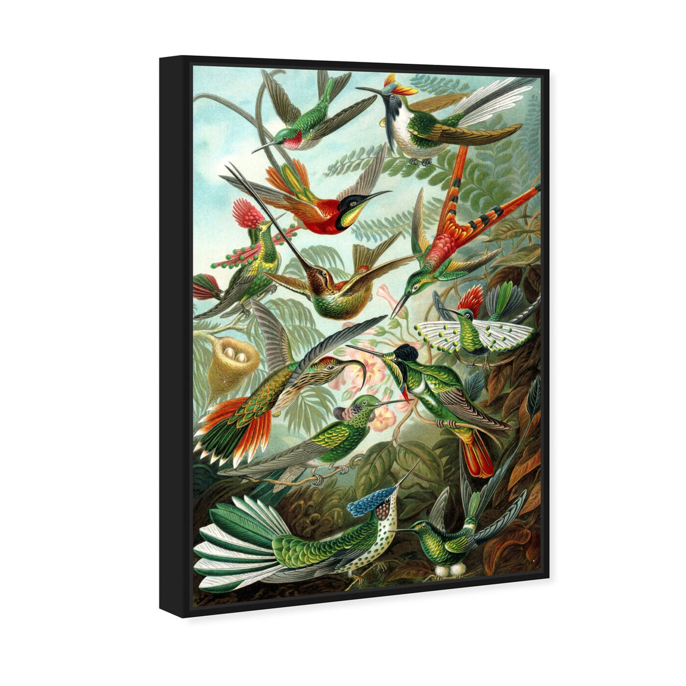 Angled view of Haeckel - Bird Study featuring animals and birds art.
