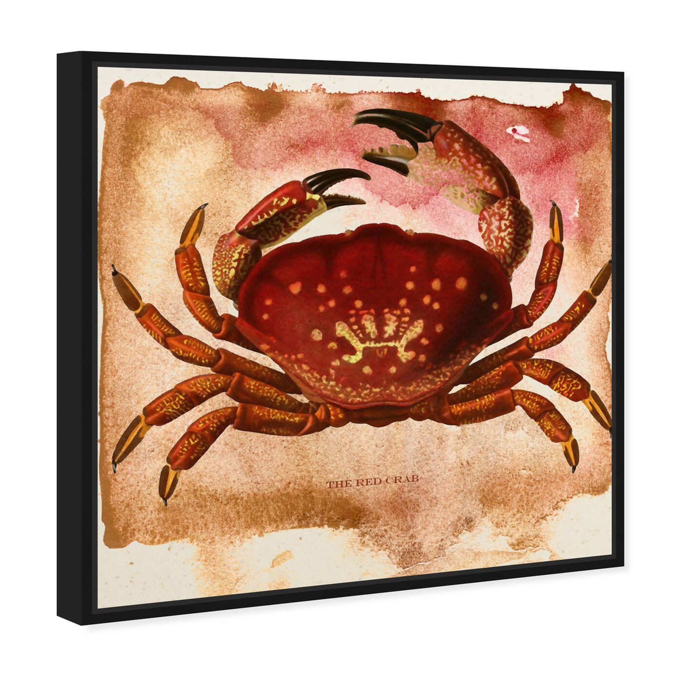 Angled view of The Red Crab II featuring animals and sea animals art.