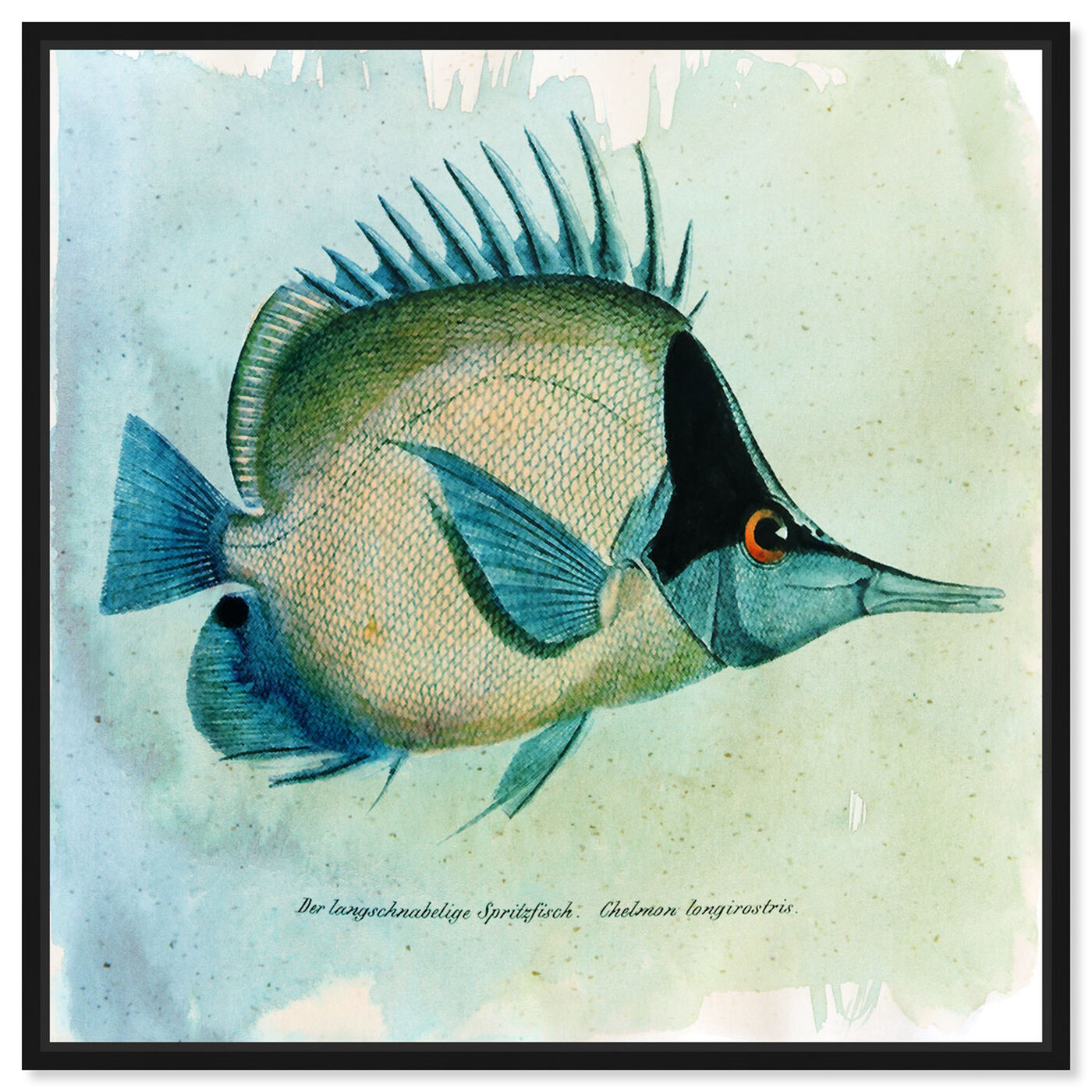 Front view of Butterfly Fish featuring animals and sea animals art.