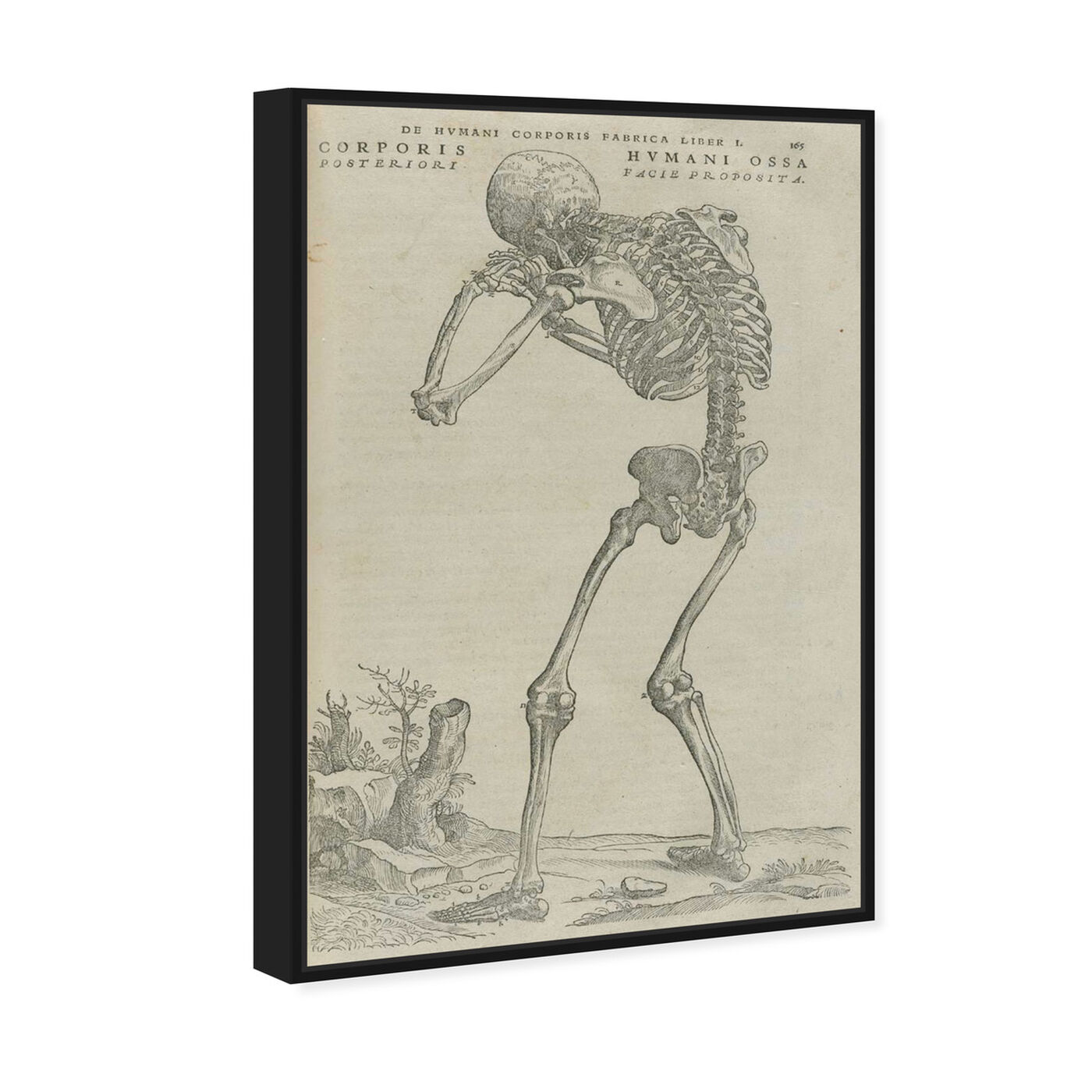 Angled view of Vesalius VI - The Art Cabinet featuring classic and figurative and classical figures art.