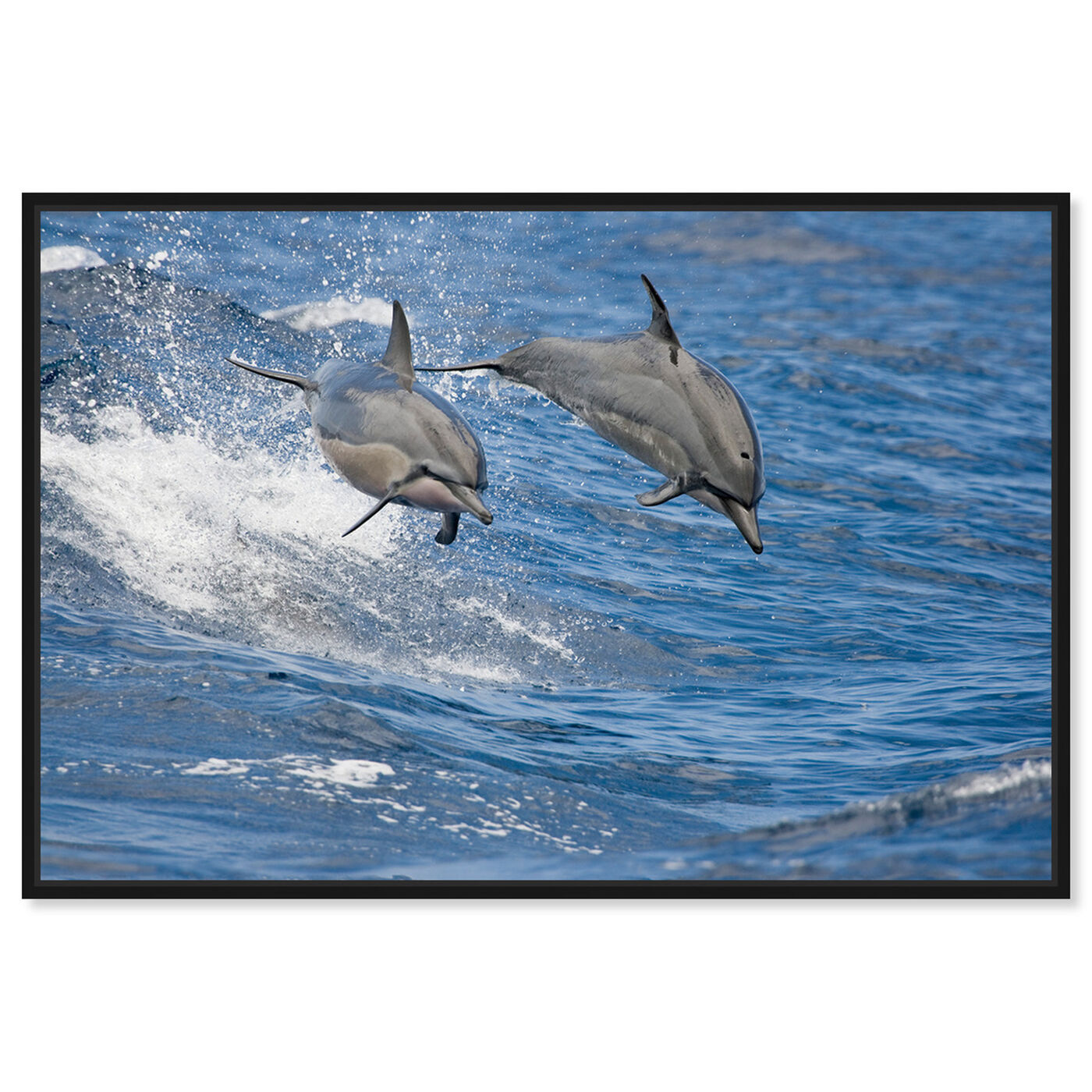 Front view of Spinner Dolphins Hawaii by David Fleetham featuring nautical and coastal and marine life art.