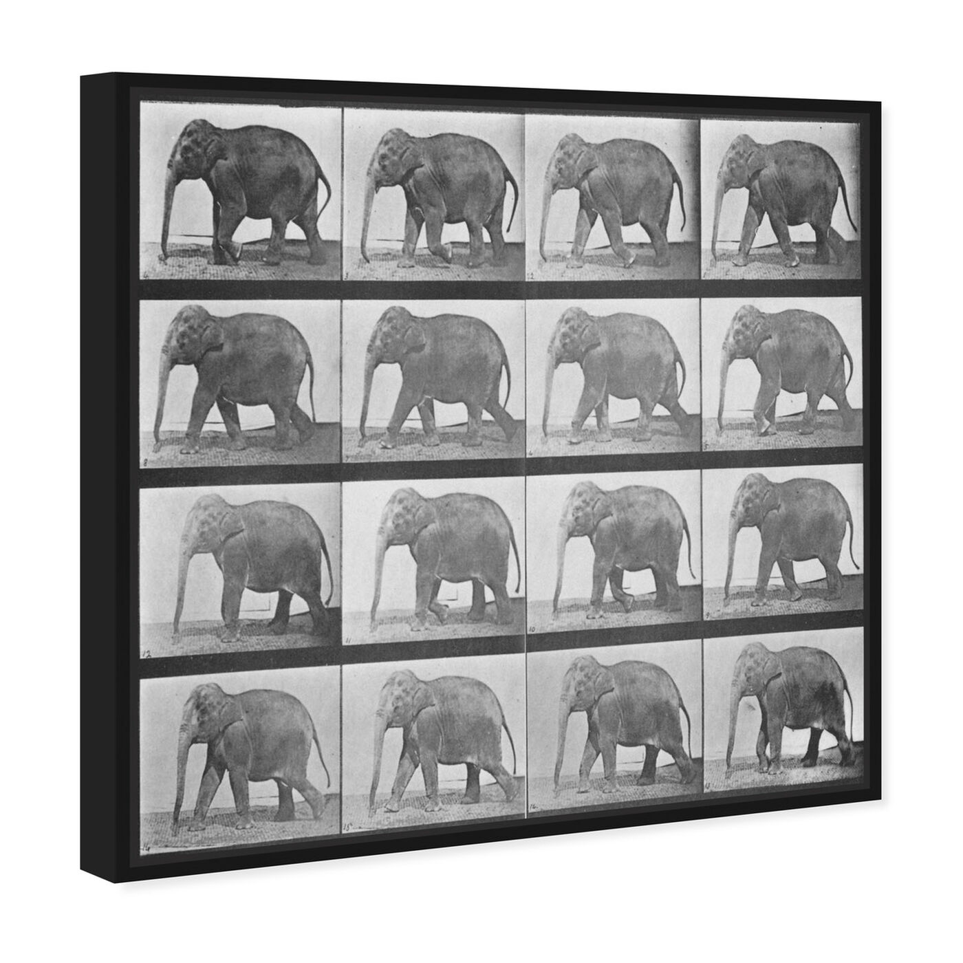 Angled view of Elephant in Motion featuring animals and zoo and wild animals art.
