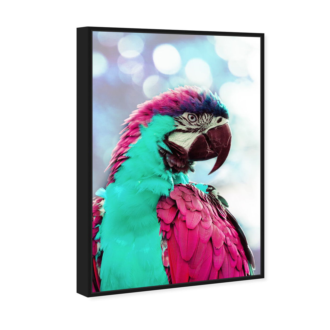 Angled view of Pink Turquoise Macaw featuring animals and birds art.