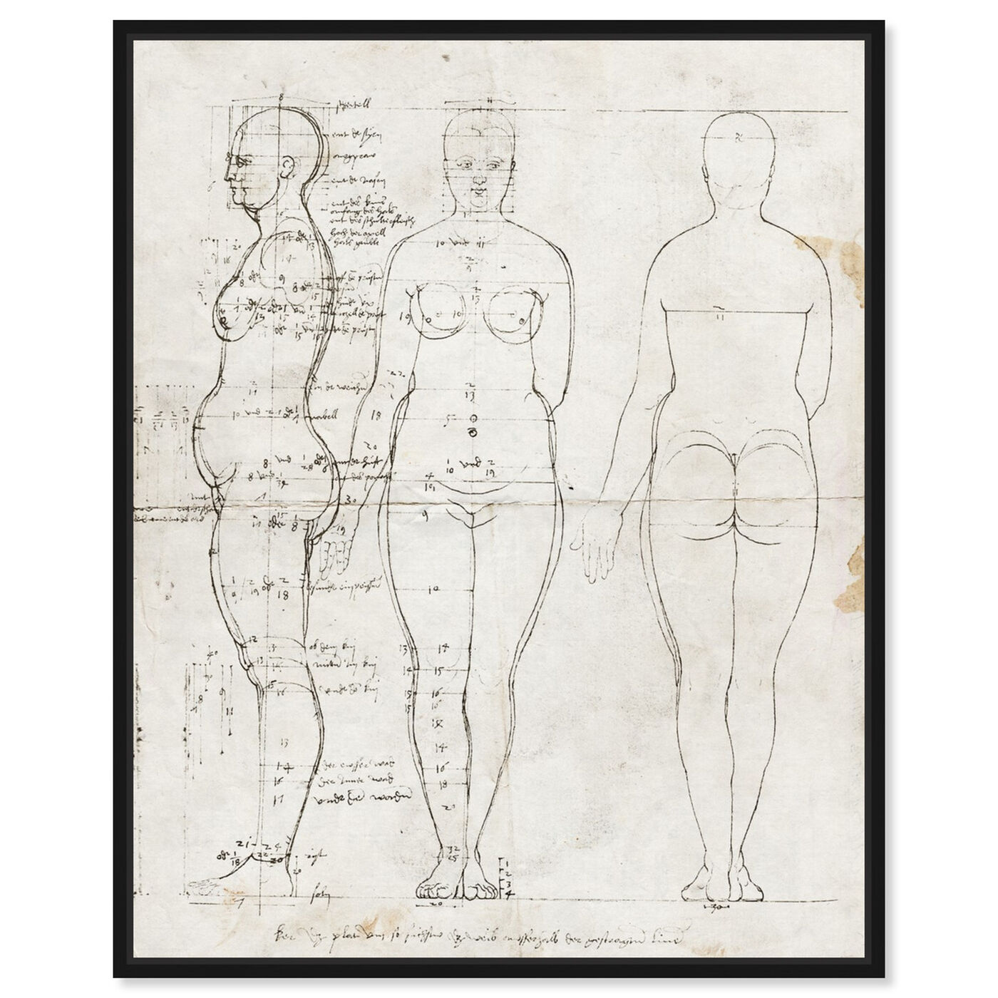 Front view of Dürer Anatomical Engraving 1513 II featuring people and portraits and silhouettes art.