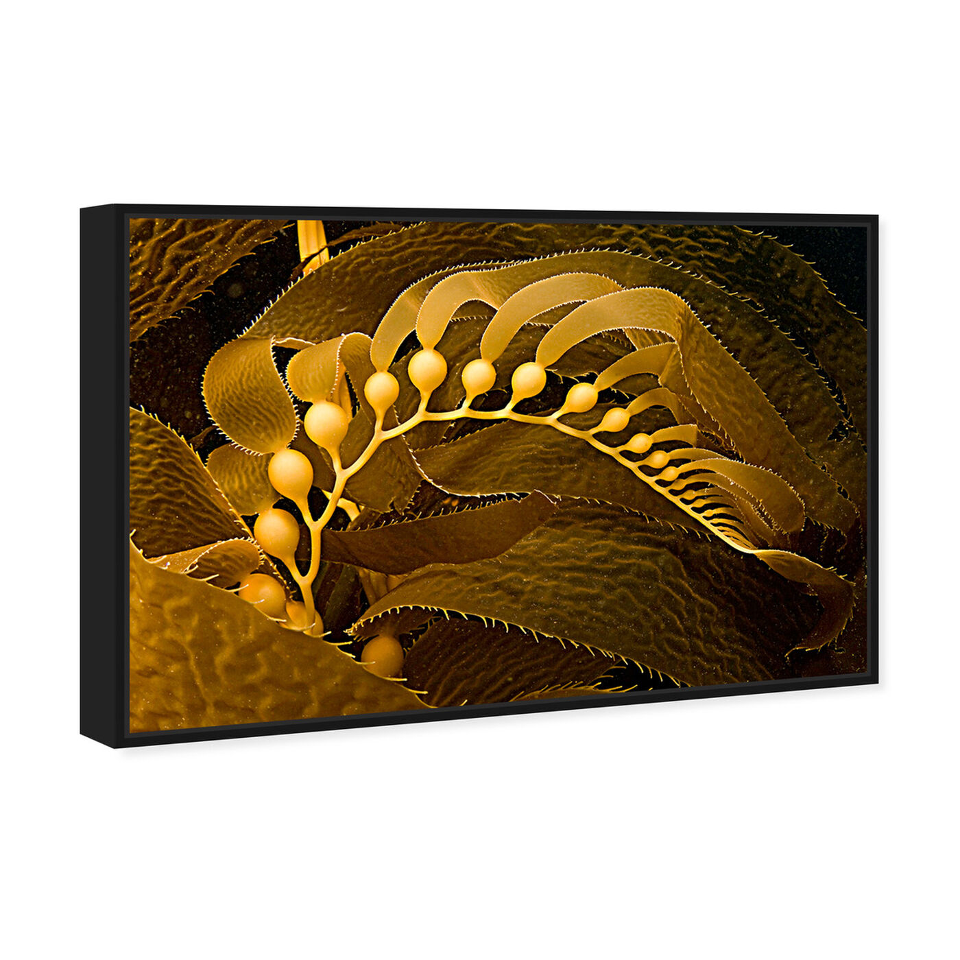 Angled view of Giant Kelp by David Fleetham featuring nautical and coastal and marine life art.