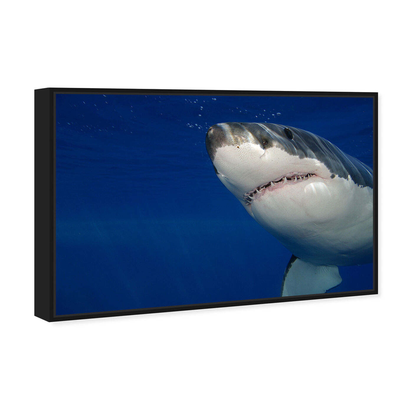 Angled view of Great White Shark by David Fleetham featuring nautical and coastal and marine life art.