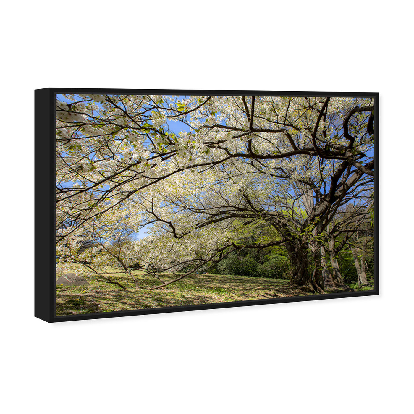 Angled view of Curro Cardenal - Under the Tree featuring floral and botanical and trees art.