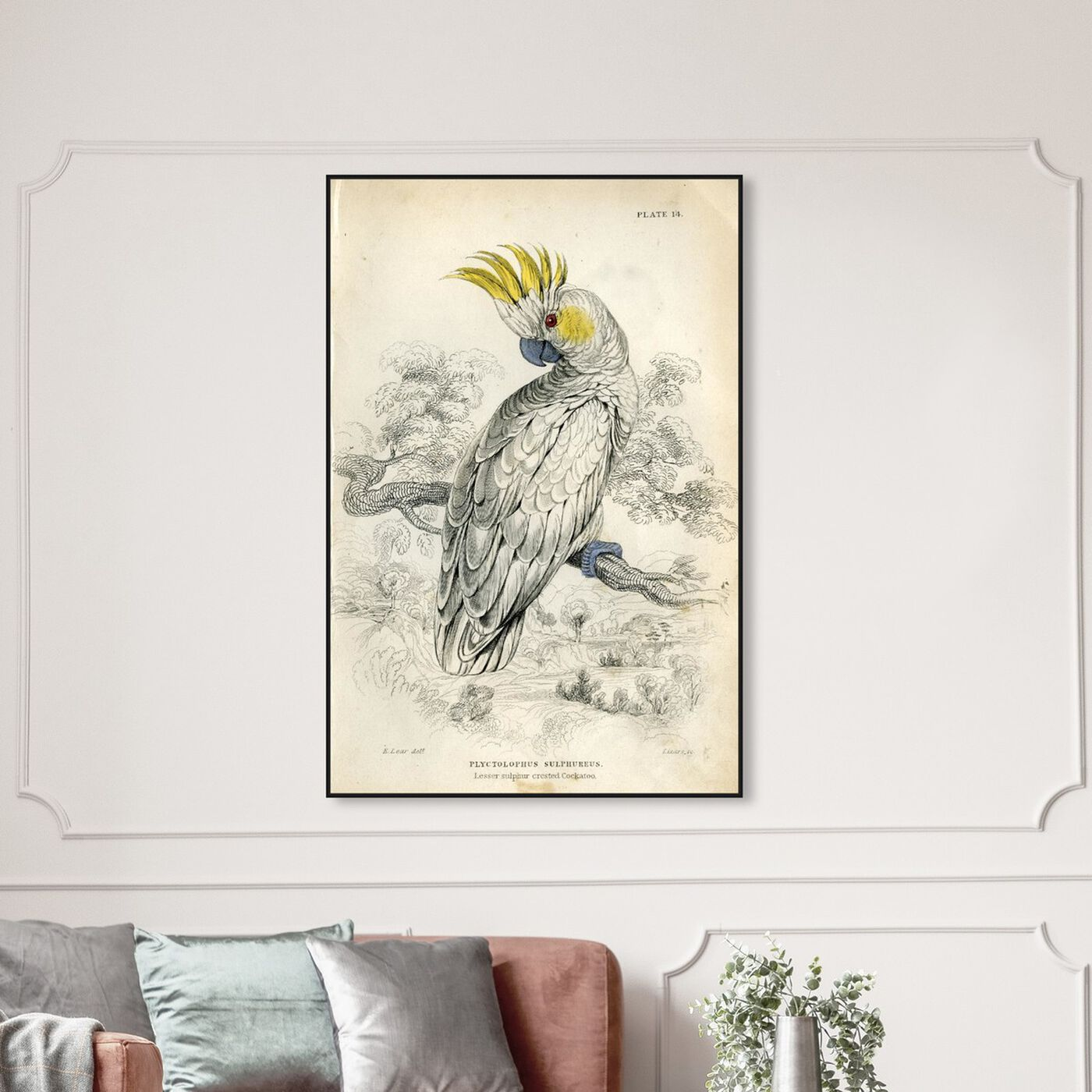 Hanging view of Sulphur Cockatoo - The Art Cabinet featuring animals and birds art.