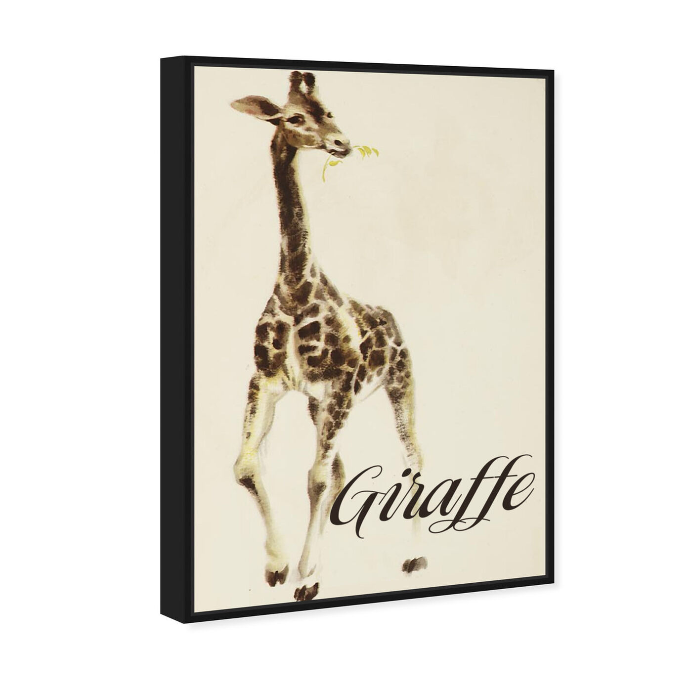 Angled view of Giraffe featuring animals and zoo and wild animals art.