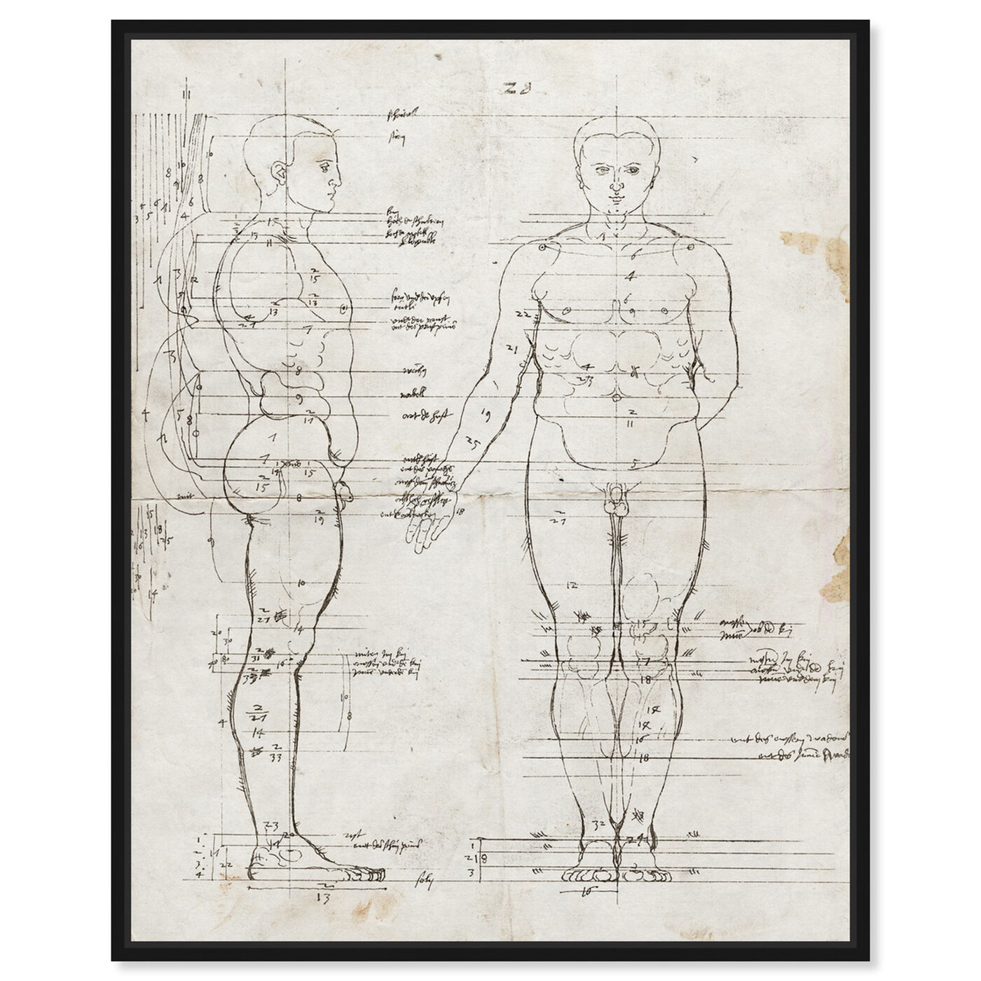 Front view of Dürer Anatomical Engraving 1513 I featuring people and portraits and silhouettes art.