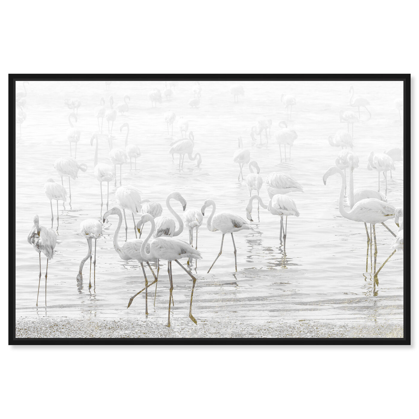 Front view of White Feather Flamingos featuring animals and birds art.