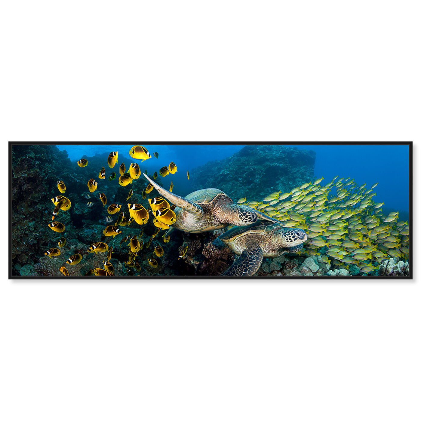 Front view of School of Fish and Turtle by David Fleetham featuring nautical and coastal and marine life art.