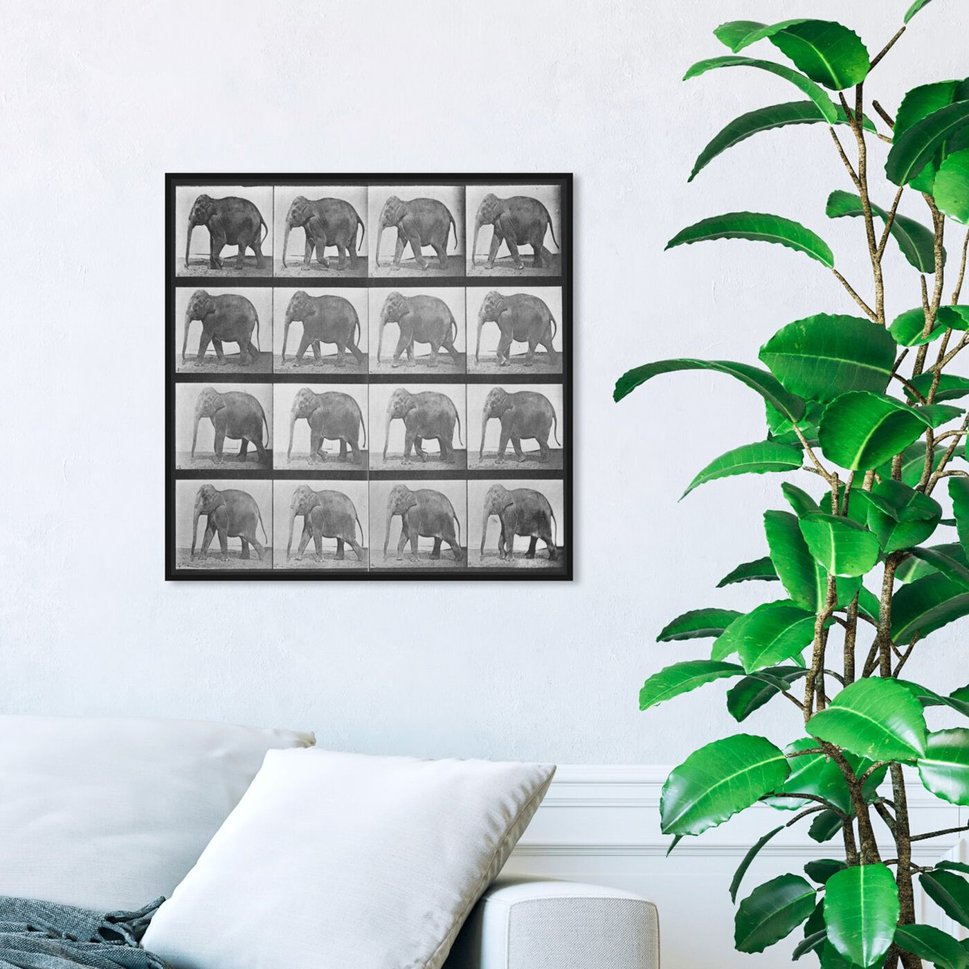 Hanging view of Elephant in Motion featuring animals and zoo and wild animals art.