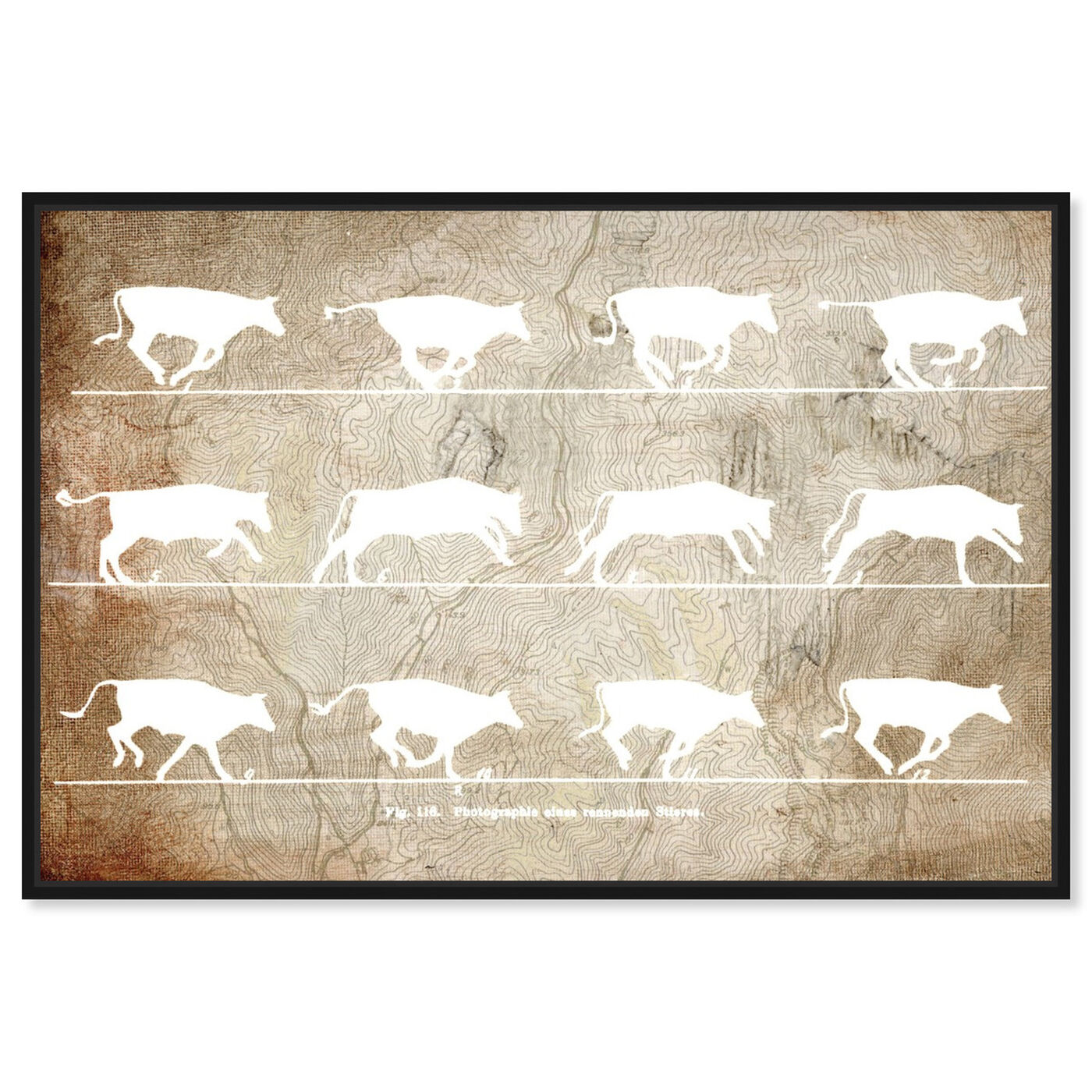 Front view of Cows in Motion featuring animals and farm animals art.