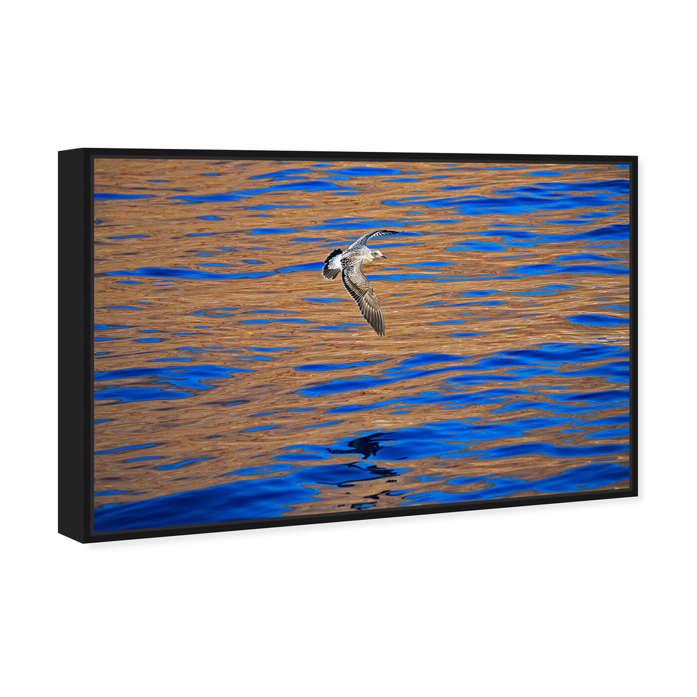 Angled view of Western Gull by David Fleetham featuring nautical and coastal and coastal art.