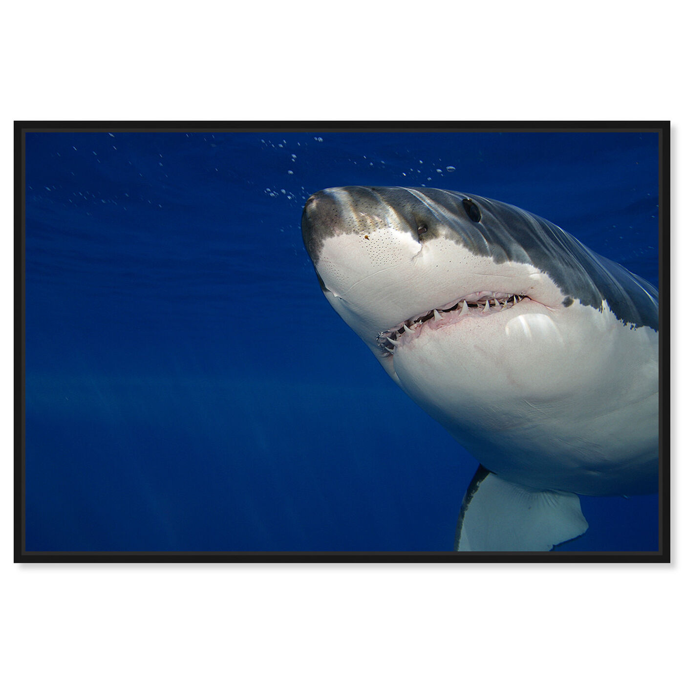 Front view of Great White Shark by David Fleetham featuring nautical and coastal and marine life art.